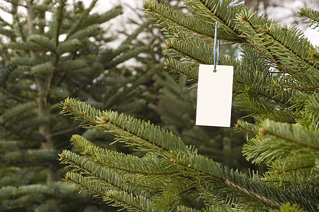 5 Places In Billings To Buy Live Christmas Trees