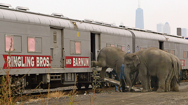 Circus Elephants Arrive In Chicago